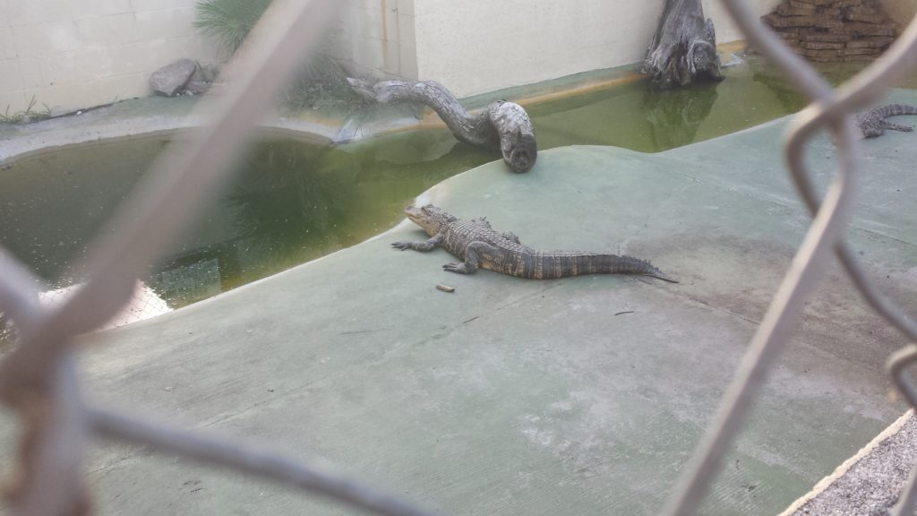 Live Gators!!